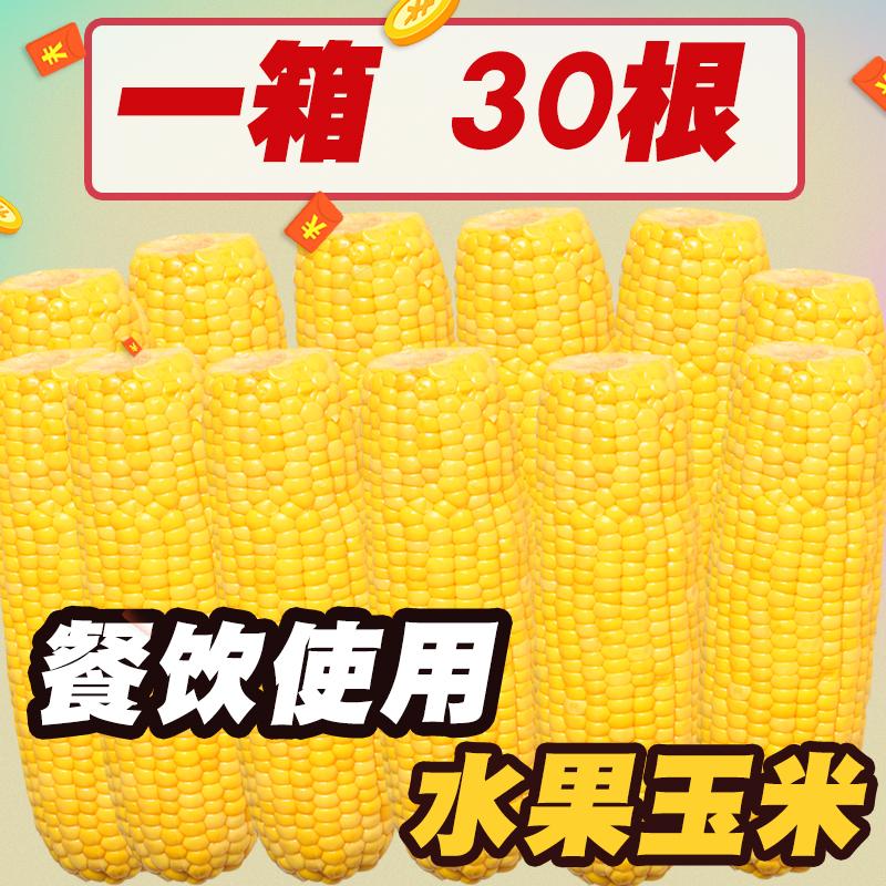 【200g*30棒】餐饮水果玉米棒即食甜玉米甜糯玉米新鲜生吃嫩玉米