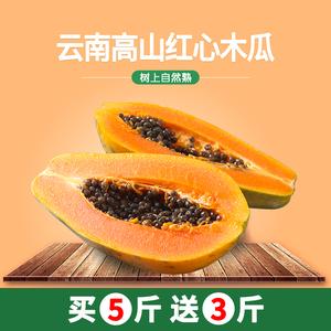 【送3斤 共发8斤】云南红心冰糖木瓜现摘当季树上熟新鲜包邮水果
