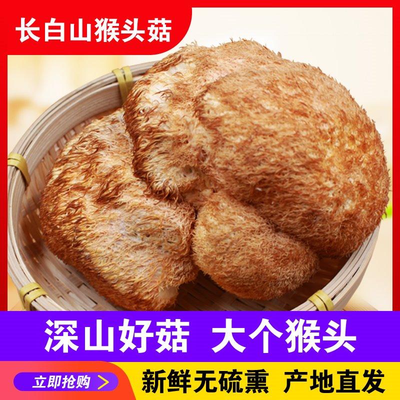 鲜猴头菇猴菇头新鲜500g粉养胃粉干货新一级东北野生特级散装礼盒