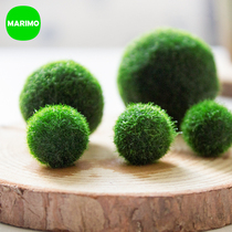 Marimo Happy cones algae seaweed ball diy ecological bottle indoor hydroponic mini green plant good breeding creative potted plants