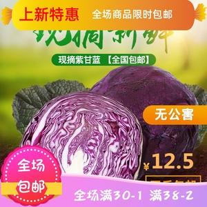现割新鲜蔬菜沙拉菜有机紫甘蓝紫椰菜5斤包邮紫包菜卷心菜红椰菜