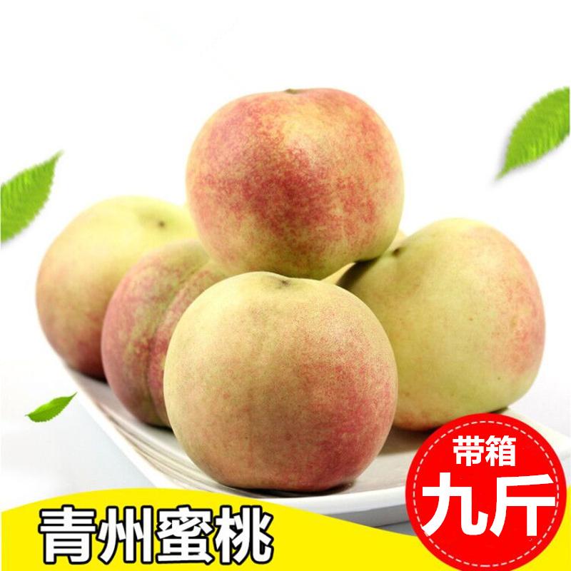 青州蜜桃 山东青州小蜜桃 脆甜离核小毛桃 新鲜水果 桃 水蜜桃9斤