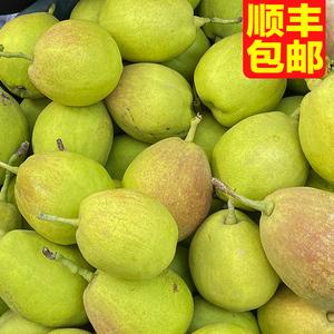 新疆庫爾勒香梨水果梨子箱裝大果正宗新鮮10當季整箱斤