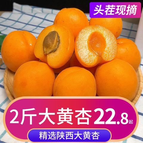 陕西大黄杏2斤杏子水果新鲜当季现摘整箱孕妇巨蜜太阳杏应季包邮