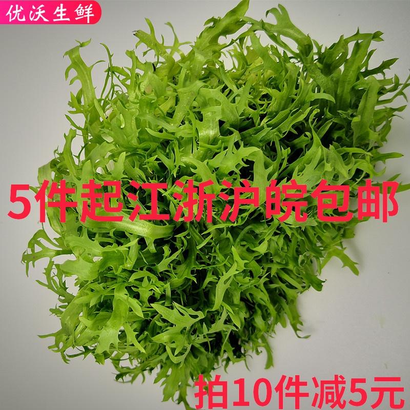 优沃生鲜  新鲜 沙拉菜 苦菊 苦叶 苦苣 苦菜生菜 新鲜蔬菜250克