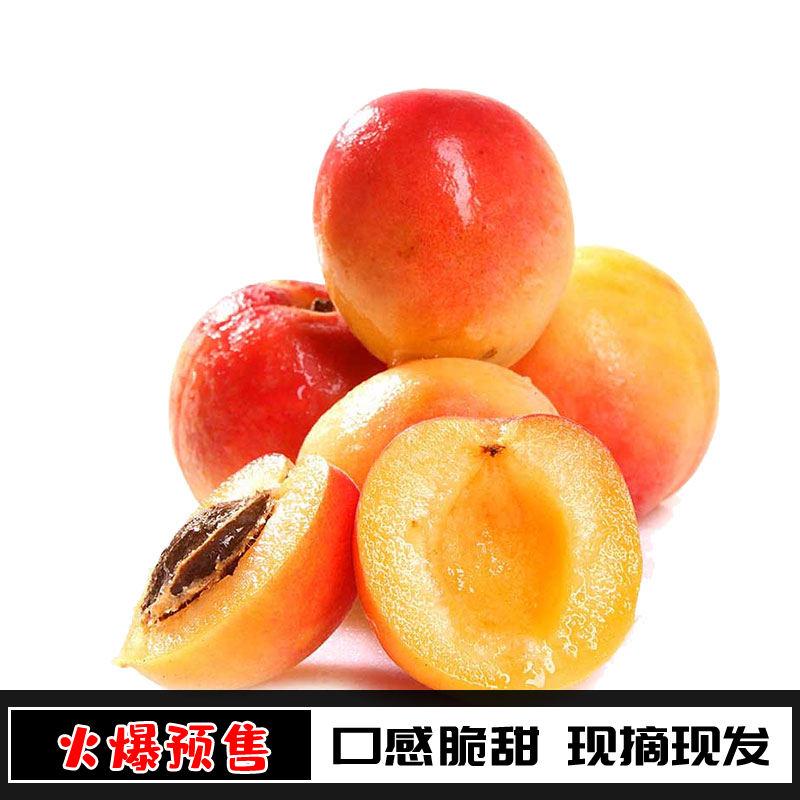 新鲜水果特产红梅杏新鲜孕妇水果实惠5斤装农家现摘顺丰现发杏子