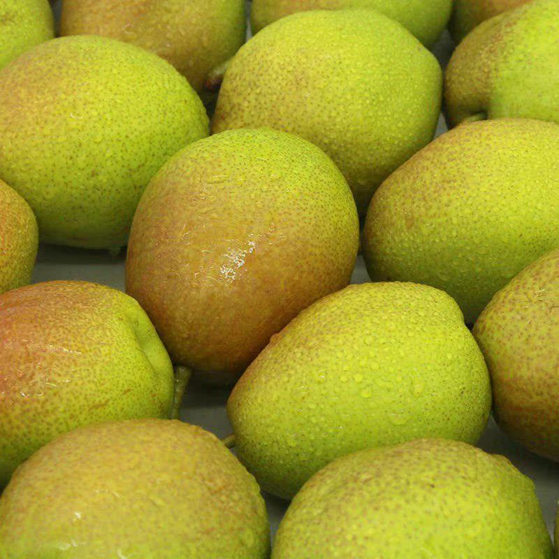 河北红香酥梨新鲜梨子10斤带箱甜梨红梨青梨香梨青皮水果35斤
