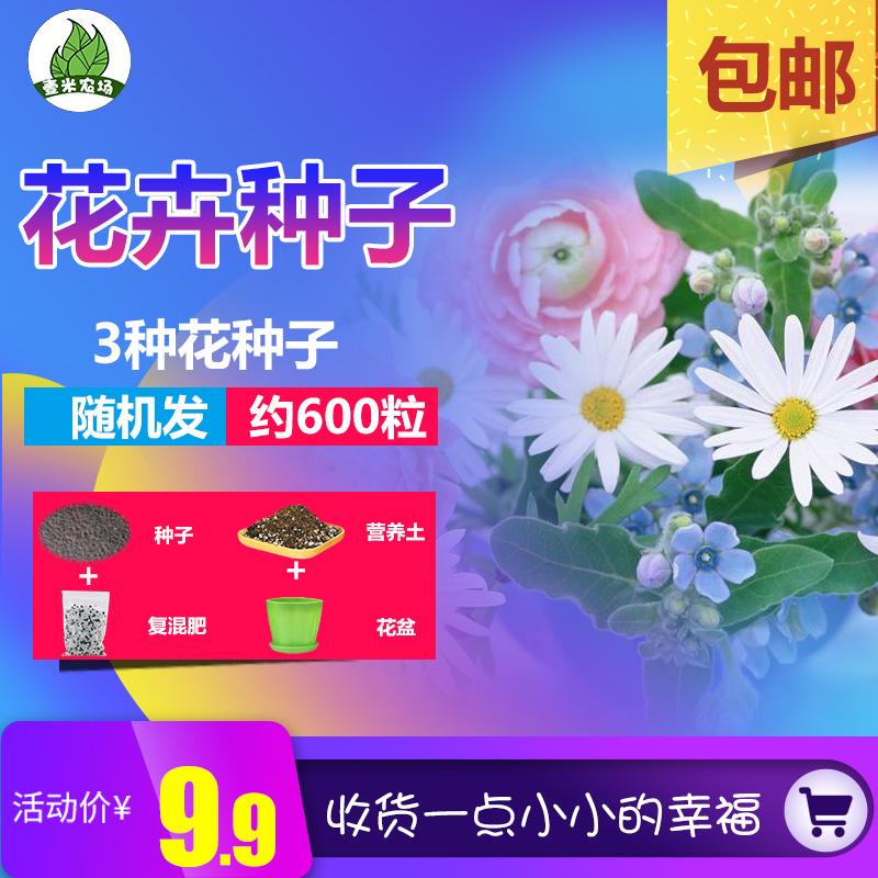 满天星康乃馨波斯菊家庭阳台庭院室内盆栽四季种植易活花种子包邮