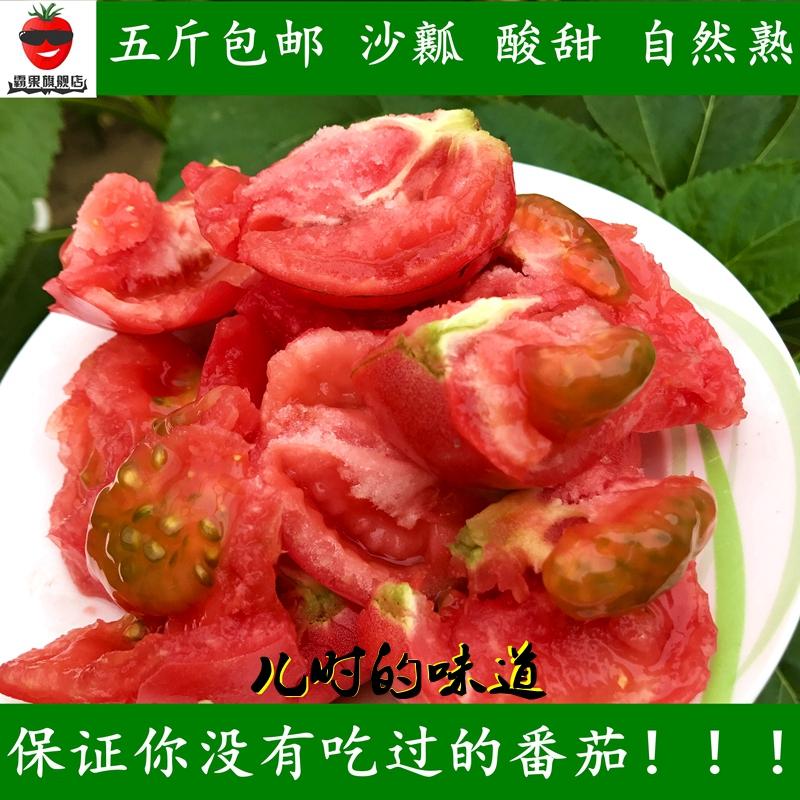 霸果现摘沙瓤番茄自然熟西红柿新鲜水果孕妇绿色蔬菜五斤