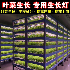 LED红蓝白植物生长灯大棚蔬菜工厂室内水培叶菜全光谱T8补光灯管