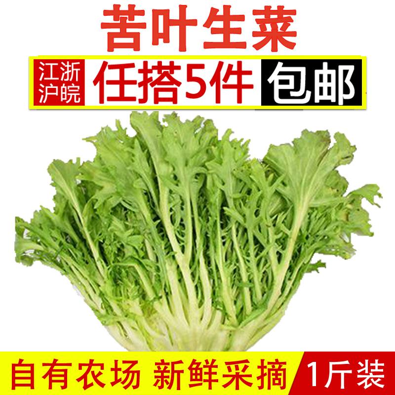 苦叶生菜500g 包邮新鲜蔬菜沙拉食材苦菊苦细叶狗芽菜苦苣生菜