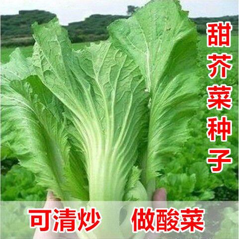 【原工場包装】野菜の種は四季を通じてキャベツと四川酸野菜の大葉と青菜の種を包んでいます。