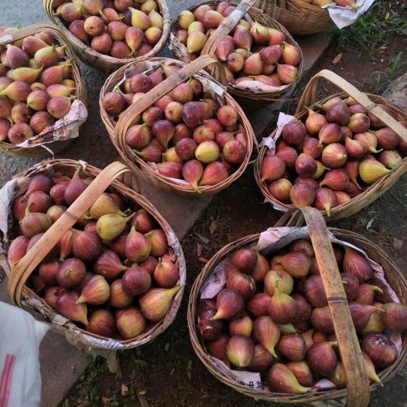 红皮无花果新鲜孕妇水果当季带箱4斤大果紫皮青皮无花果热销0件需要用券
