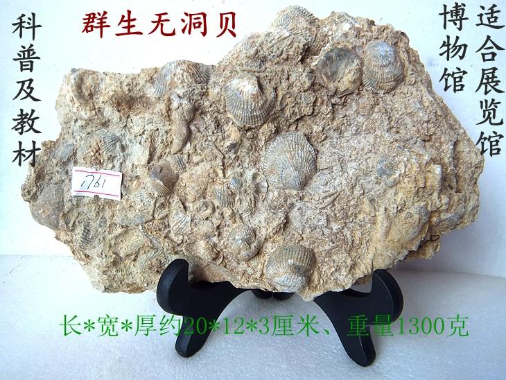 Ископаемые Артикул 585146236744