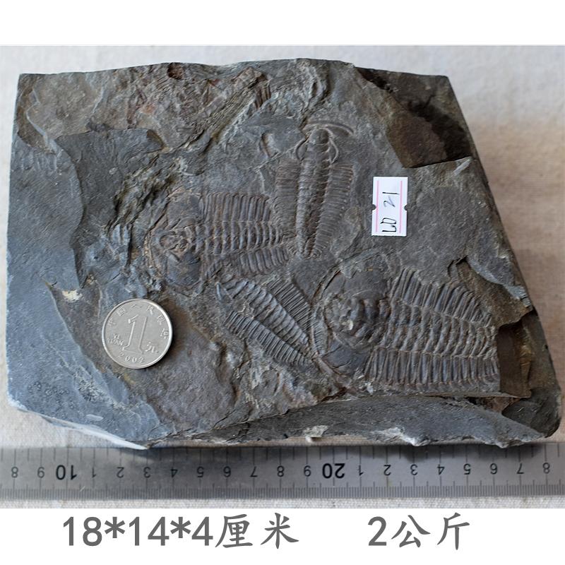 Ископаемые Артикул 627544865214