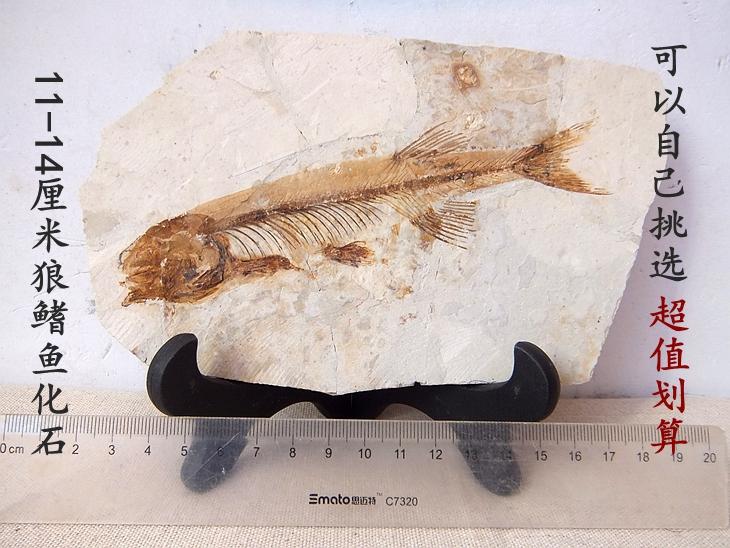 Ископаемые Артикул 606547097514