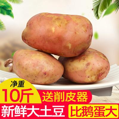 云南新鲜土豆大个10斤包邮马铃薯洋芋农家现挖蔬菜大号红皮黄心