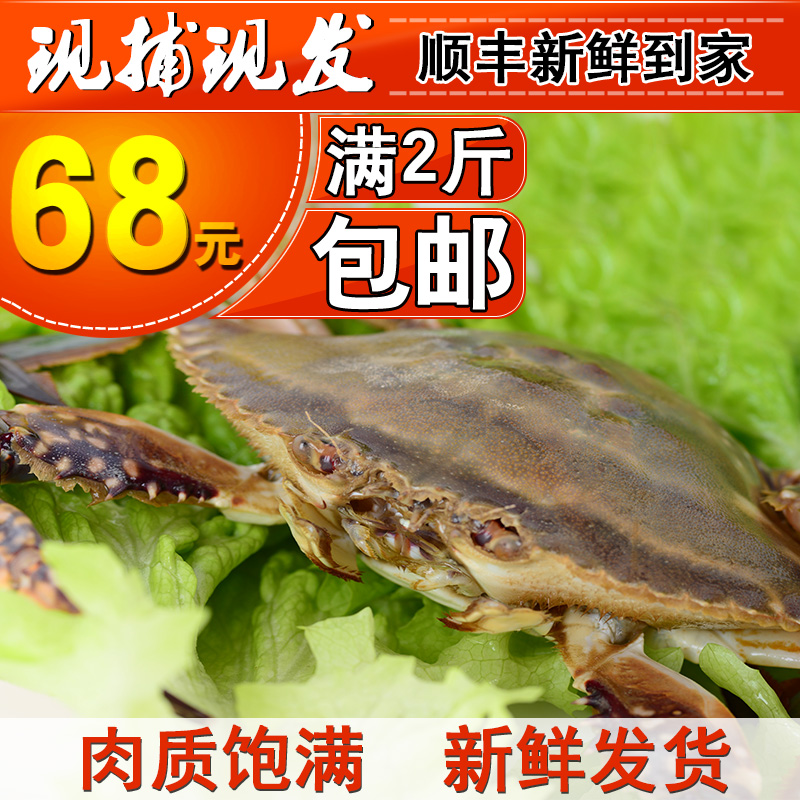 青岛海螃蟹鲜活特大海鲜公梭子蟹500g鲜活免邮新鲜顺丰包邮冷冻