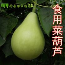 菜葫芦种子瓢葫芦种子菜种子四季播农家蔬菜家庭园艺春季蔬菜种孑