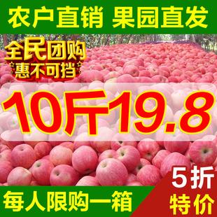 【今日特价】陕西苹果水果10斤整箱吃的脆甜大现摘新鲜红富士批发图片