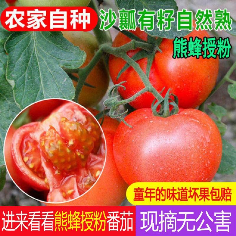 5斤西红柿新鲜沙瓤水果番茄农家现摘蔬菜自然熟非普罗旺斯