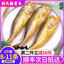 舟山新鲜超大梅童鱼500g海捕黄花鱼黄鱼冷冻海鲜水产鲜活生鲜海鱼