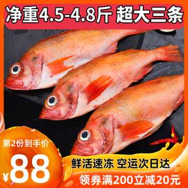 红石斑鱼冷冻整条深海红鱼大龙胆鱼富贵鱼深海鱼鲜活海鲜水产斑鱼