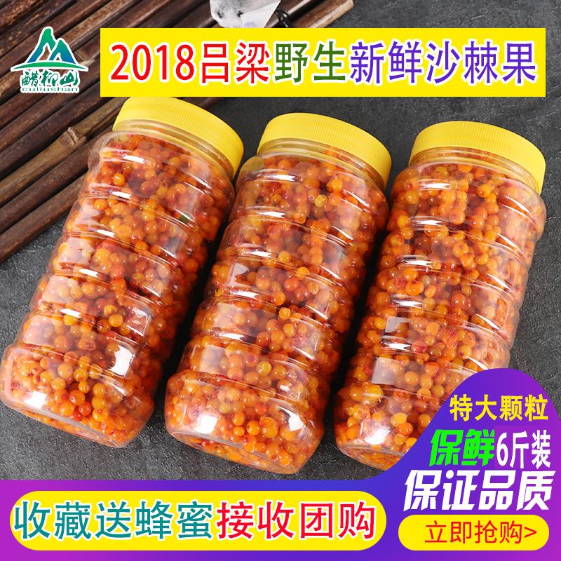 2018吕梁野生新鲜沙棘果精选特级大果沙棘酵素专用6斤特价包邮