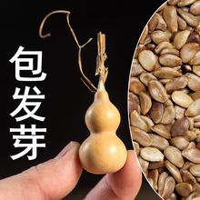 各种葫芦种籽葫芦种仔文玩手捻特大特小巨型亚腰胡芦四季葫芦籽子