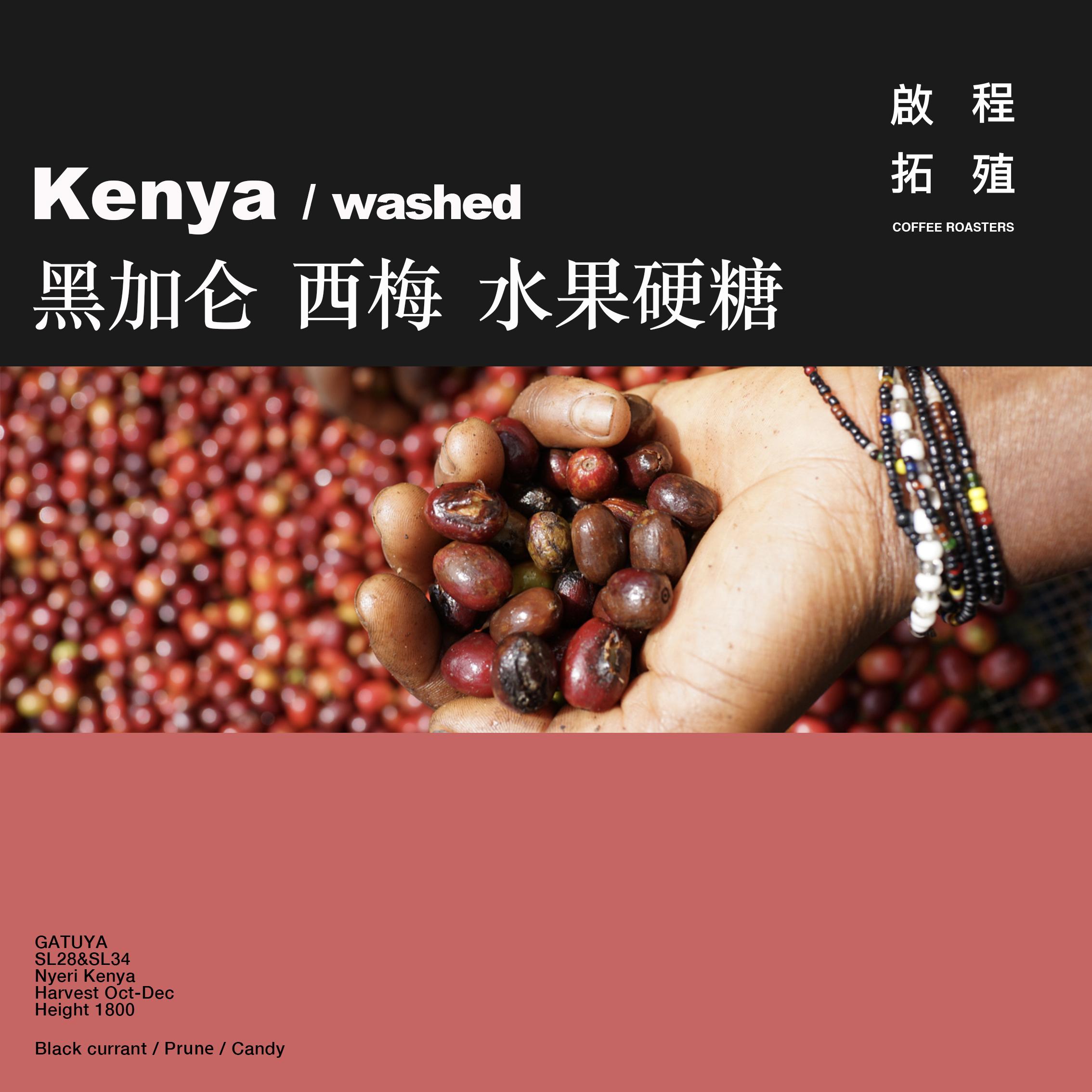 【Terraform】 黑加仑西梅 肯尼亚TOH亚军GATUYA手冲精品咖啡豆