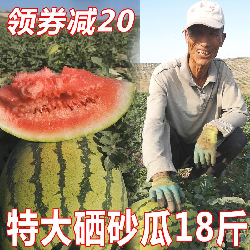 净重18斤宁夏硒砂瓜新鲜水果现摘现发特大中卫石头缝的沙瓤甜西瓜