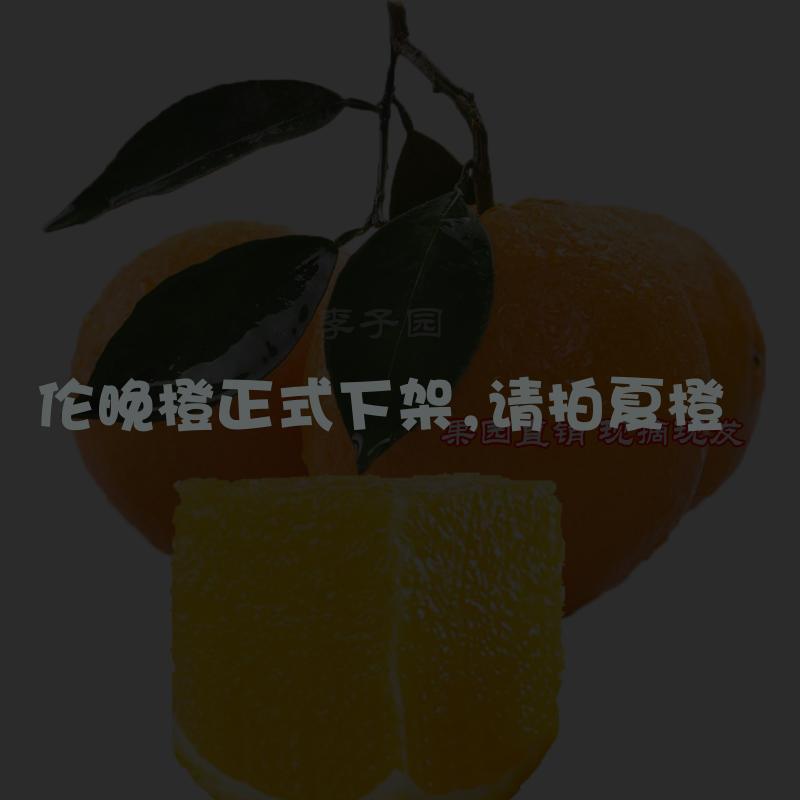 秭归伦晚脐橙婴儿孕妇湖北宜昌帝王新鲜春橙手剥甜橙子非红肉血橙