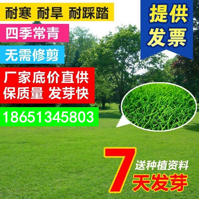 绿化草坪种子四季青耐寒耐旱庭院护坡草皮草籽黑麦草高羊茅马尼拉,可领取元淘宝优惠券