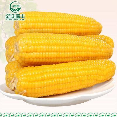 【新品特惠】河北张家口天然黄糯玉米8穗真空独立包装非转基因