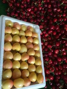 已清树金车厘子超大果佳红黄樱桃