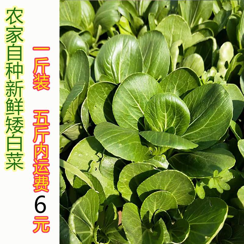 1斤】安徽太湖县农家自种当季时令蔬菜上海青矮白菜 新鲜绿色叶菜