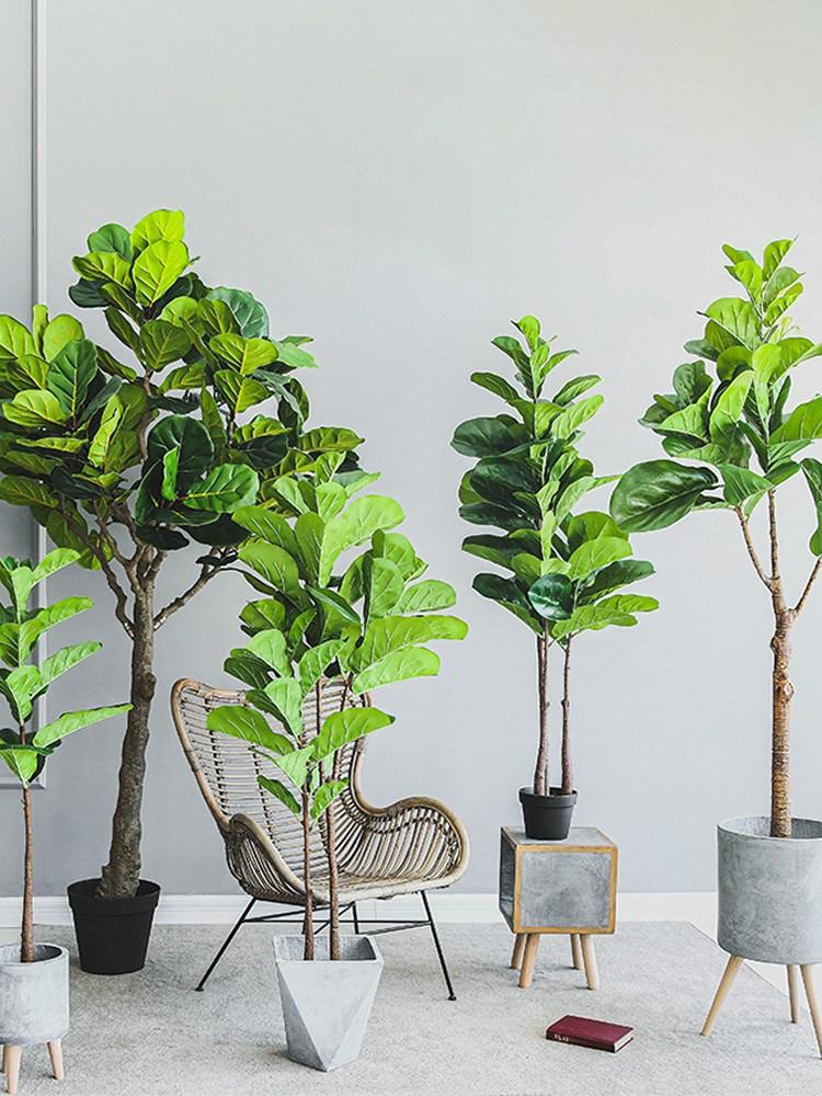 【七茉】仿真琴叶榕盆景盆栽大型绿植物家居室内装饰摆件INS北欧
