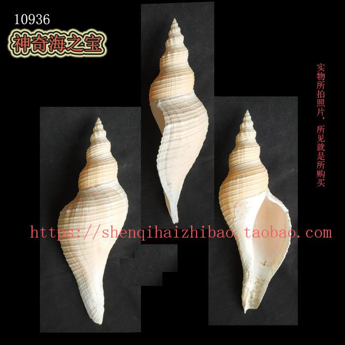 Монастырские ракушки Артикул 560229318090