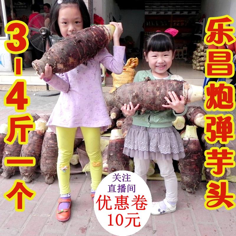3~4斤1个乐昌炮弹芋头 张溪香芋  槟榔芋  香芋 PK 荔浦芋头