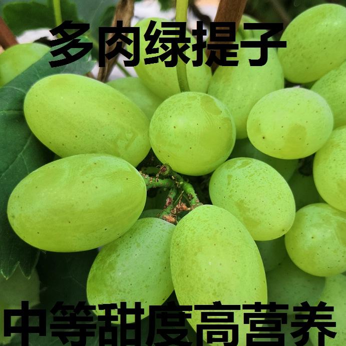 维多利亚绿葡萄提子多肉中等甜度适合老人孩子孕妇水果包邮非巨峰
