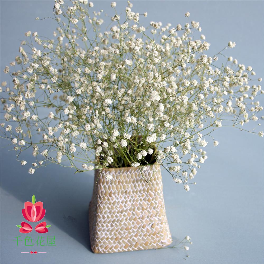 Сухие цветы в небе звезда вечная жизнь цветок незабудка любовник трава словосочетание цветочная композиция гостиная спальня кухня большой зал декоративный качели установить