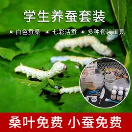 蚕宝宝活体学生养蚕套装新鲜桑叶七彩春蚕卵白色金丝蚁蚕养蚕工具图片