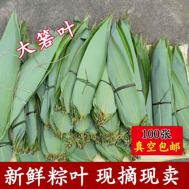 新鲜干粽叶新货箬叶纯天然野生大粽叶包粽子100张免邮非麻叶