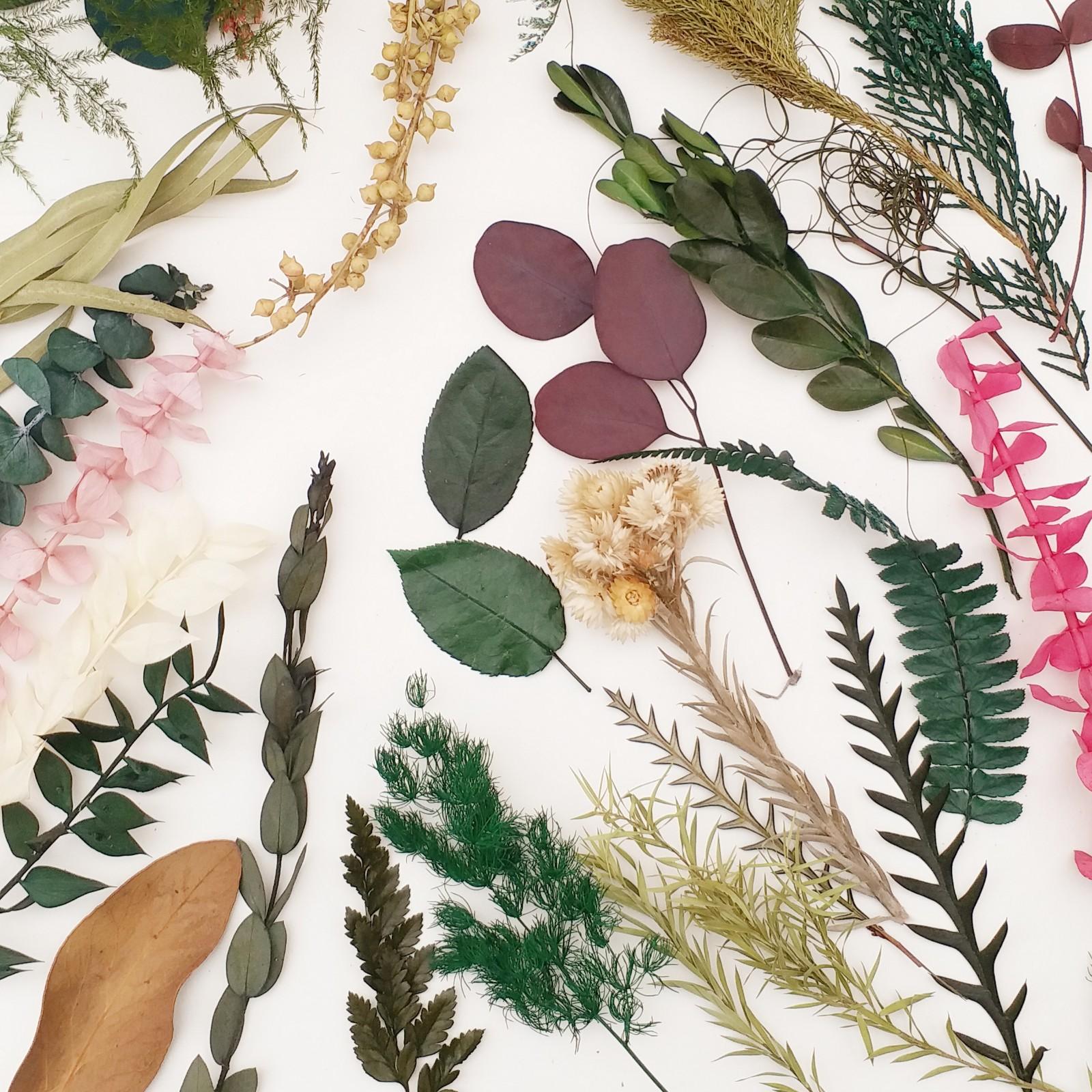 植物合集永生花尤加利羊齿玫瑰叶情人草匙叶草石松手工diy材料