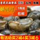 宁波产6A醉泥螺王 黄泥螺醉海螺 个大无沙 宁波腌制海鲜