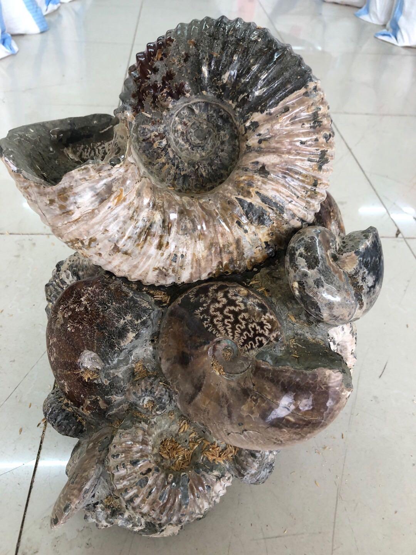 Ископаемые Артикул 614187659082