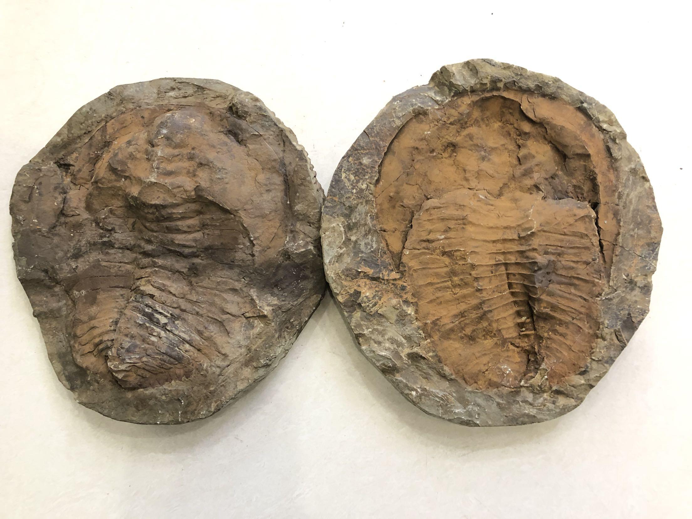 Ископаемые Артикул 599099457909