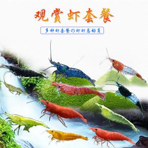 观赏虾活体除藻虾工具集火烤漆套餐