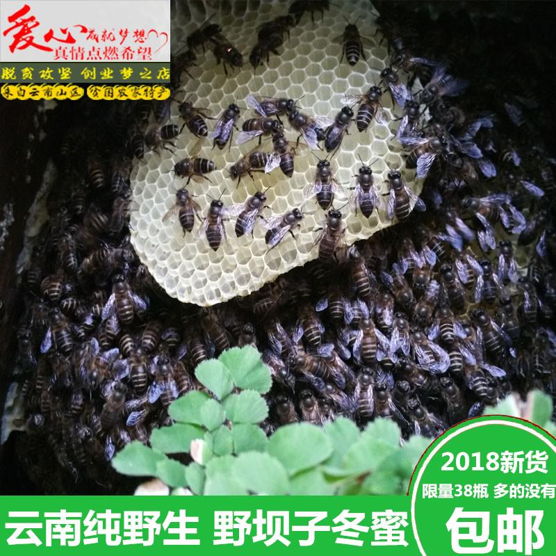 云南特产土蜂蜜绿色纯天然深山纯野生野坝子冬蜜结晶蜜非农家自产