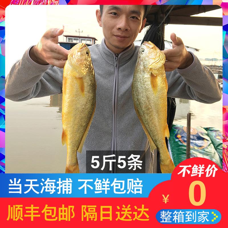 宁德黄鱼海鲜鲜活黄花鱼海鱼生鲜大黄鱼5斤5条新鲜冷冻整箱黄瓜鱼